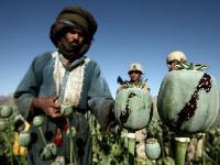 Пазл длиною в жизнь (55): Десятилетний юбилей демократизации Афганистана