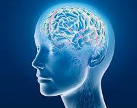 Мозг и сознание: гармония взаимодействия