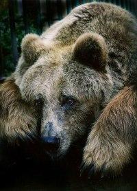 Медведь - символ Руси