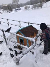 Дом для уток появился в Кирове