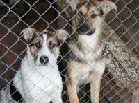 Контракт с организацией по отлову собак могут расторгнуть
