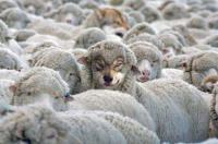 антихристы 2013, мировой кризис, духовный кризис, ЕССАЦ, добро, зло, вера, доверие,