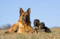 Фото: Lenka Dankova, iStockphoto.com