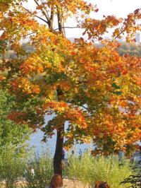 Осень. Автор фото - Л.Ф.Зеркалова